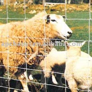Equipment for sheep farm