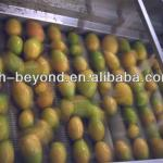 complete set of mango processing line-