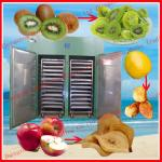 2013 Hot selling new functional fruit drying machine-