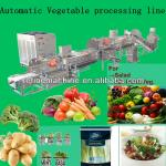automatic vegetable processing line/salad/IQF-