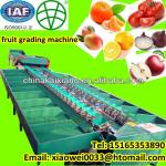 Fully automatic double line tomato apple grading machine-