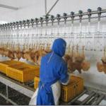 Chicken Slaughtering Production Line|Poultry Slaughtering machine