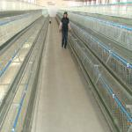 hot sale H type used poultry battery cages for sale-