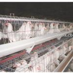 High Quality Cages for Chicken-